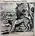 Логическая модель тигра.jpg