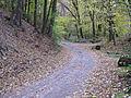 Лісова дорога - panoramio.jpg