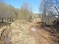 Начало лесной дороги, начало мая 2013 - panoramio.jpg