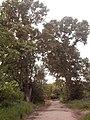 На ул. Мира нашла шалаш на дереве) - panoramio.jpg