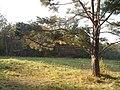 Олександрія - panoramio (13).jpg