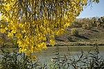 Осіннє листя біля озера неподалік дендропарку.jpg