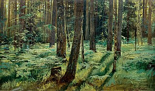 Ferns in the Forest. Siverskaya. Study