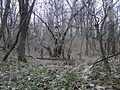 "Парк ""Динамо"". Апрель - panoramio.jpg"