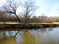 Пойменный ивняк по правому берегу реки Яузы выше пр. Дежнева (ивняк в правобережной пойме р. Яузы выше пр. Дежнева) 02.jpg
