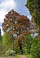 Сирецький дендропарк 06.jpg