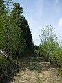 Тропа на опушке - panoramio.jpg