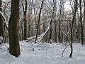 Украина, Киев - Голосеевский лес 165.jpg