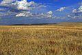 Урочище Утиная гора 4 - panoramio.jpg