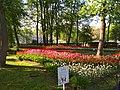 Фестиваль тюльпанов в парке имени Кирова на Елагином острове, центральная часть парка.jpg