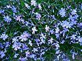 Цветы5.jpg