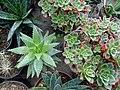 گلخانه کاکتوس دنیای خار در قم. کلکسیون انواع کاکتوس 38.jpg