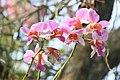 মধুপুর জাতীয় উদ্যানের অর্কিড ৩.jpg