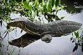 ตะกวด Photographed by Trisorn Triboon-80 (2).jpg