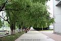 东北师大校园柳树 campus willows - panoramio.jpg
