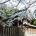 八幡神社の本殿 下市町阿知賀 2012.4.15 - panoramio.jpg