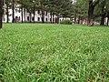 吉林医药学院DSCF0078 - panoramio.jpg