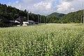 新行高原 - panoramio.jpg
