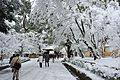 雪の金閣寺 Kinkakuji temple in snow (5360755648).jpg