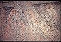 017 Grand Canyon Aerial of Burro Damage 1975 (4951582499).jpg