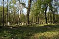 1475viki Cmentarz żydowski przy ul. Lotniczej. Foto Barbara Maliszewska.jpg