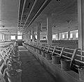 1960 porcherie au CNRZ Cliché Jean-Joseph weber-1.jpg
