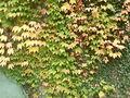 2008-10-19-niederfinow-10.jpg