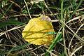 2009-10-02 (7) Leaf, Blatt.JPG