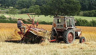 2010 - Cutting wheat for thatching (geograph 1970887).jpg