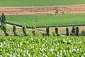2012-07-11 18-42-58 Switzerland Kanton Schaffhausen Braatle.JPG