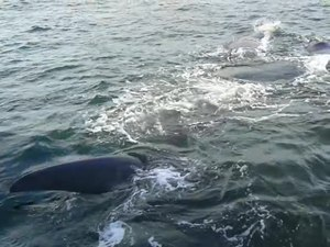 Файл:20130924 Hermanus Bay whale watching 1.webm
