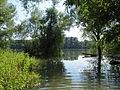 20140723Hochwasser Germersheimer Rheinauen1.jpg