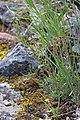 2015.06.06 12.16.34 IMG 2667 - Flickr - andrey zharkikh.jpg