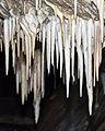 2015 Jaskinia Niedźwiedzia w Kletnie, szata naciekowa 26.jpg