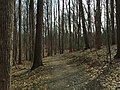 2016-02-08 12 02 12 View north along the Gerry Connolly Cross County Trail between Miller Heights Road and Vale Road in Oakton, Fairfax County, Virginia.jpg