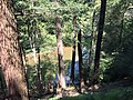 2017-08-19 11 44 04 View through a grove of Eastern Hemlocks towards Bull Run along the Bull Run-Occoquan Trail between the Yellow Trail and the Red Trail within Hemlock Overlook Regional Park, in southwestern Fairfax County, Virginia.jpg