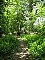 2018-05-10 Woodland footpath, Hanworth (1).JPG