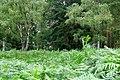 2019-08-17 Hike Hardter Wald. Reader-14.jpg