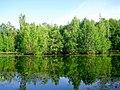 3073. Озеро Собачье в парке Сосновка.jpg