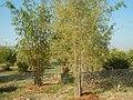 43Lubao Bamboo Hub & Eco-Park Santa Catalina Pampanga 38.jpg