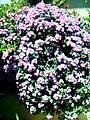 A@a part of Andr. garden - panoramio (3).jpg