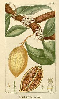 A. acida