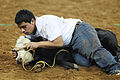 A Texas youth wrestles a calf in attempt to harness it, during a Calf Scramble event, during Rodeo Houston BP Super Series 1, Round 2, in Houston Reliant Stadium, Houston, Feb. 29, 2012 120229-A-CJ112-875.jpg