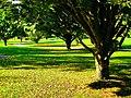 A Very Nice Park - panoramio.jpg