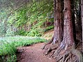 A Winding Path at Millbuies - geograph.org.uk - 1347394.jpg