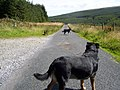 A day out - geograph.org.uk - 1152884.jpg