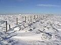 A fence on Hartsgarth Fell - geograph.org.uk - 320821.jpg