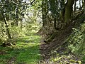 A footpath through the 2700 acres of Arlington Court. - geograph.org.uk - 1285130.jpg
