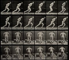 A man pushing a roller. Photogravure after Eadweard Muybridg Wellcome V0048700.jpg