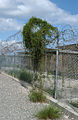A picture of Camp XRay, Guantanamo -a.jpg